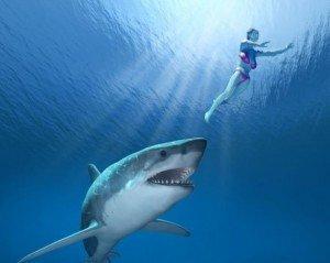 Entrepreneur : avez-vous le profil d'un requin ?