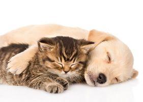 Comment faire de la garde d'animaux à domicile