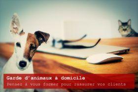 Comment faire de la garde d'animaux à domicile (pet sitter) ?