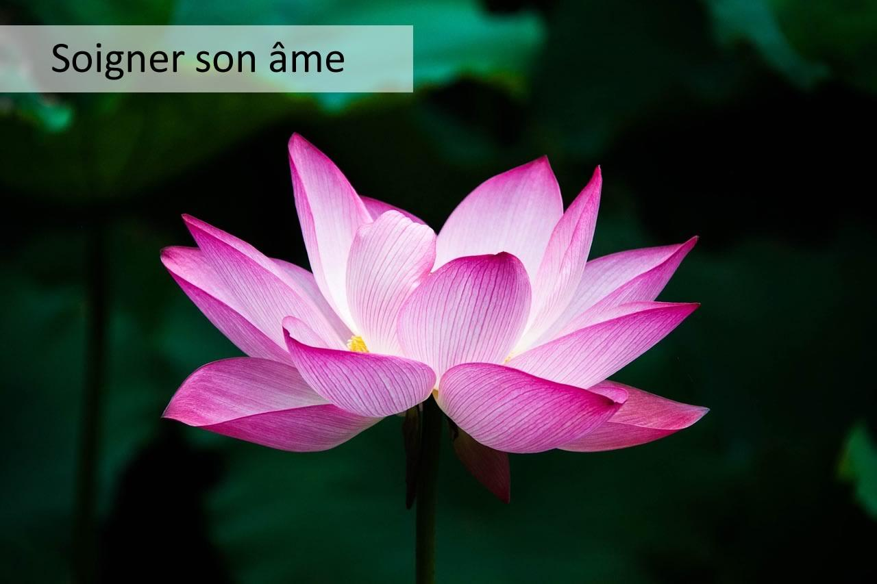 soigner son âme avec une fleur de lotus